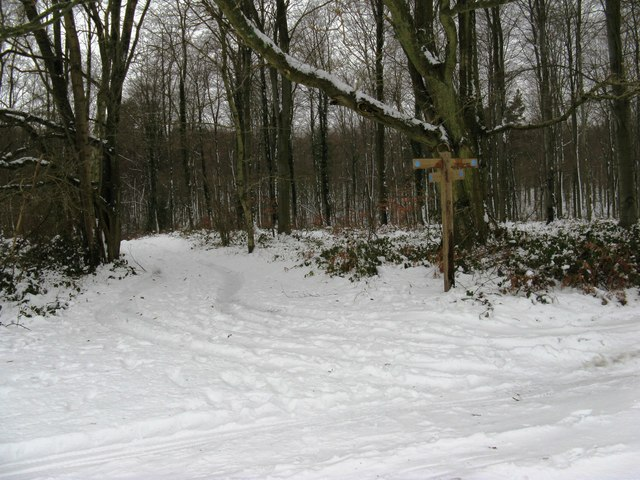 Bridleway junction at the corner of North Wood