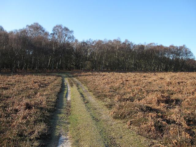 Path into Denny Wood