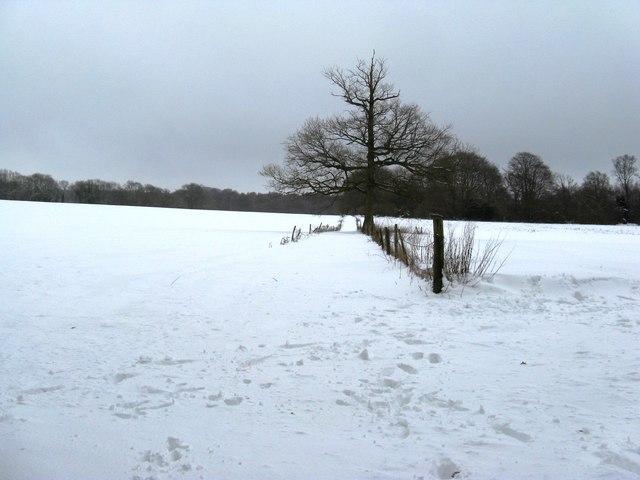 Straightforward bridleway alongside lone tree