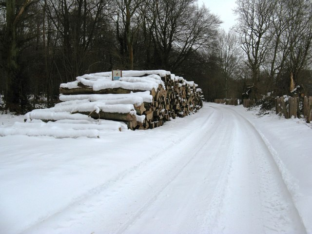 Log pile on bridleway between Northwood Cottages and Warren Barn