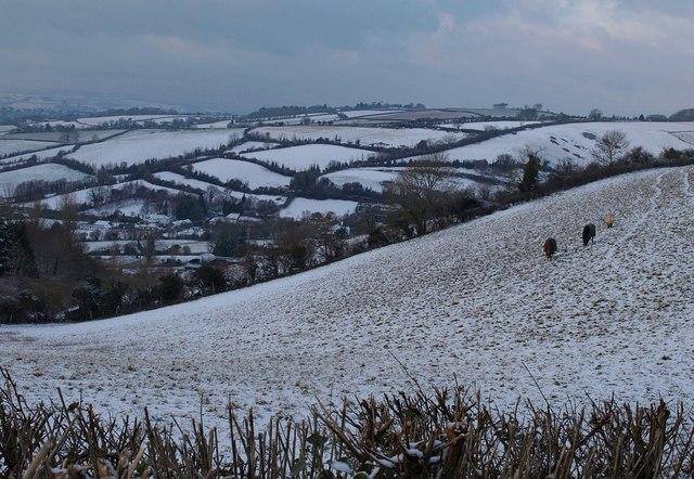 Snowy fields north of Torquay