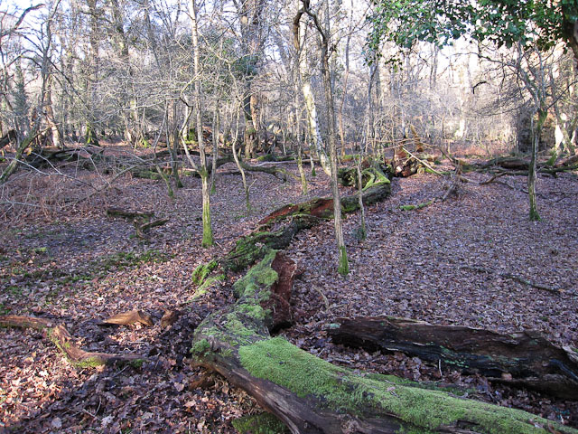 Whitley Wood