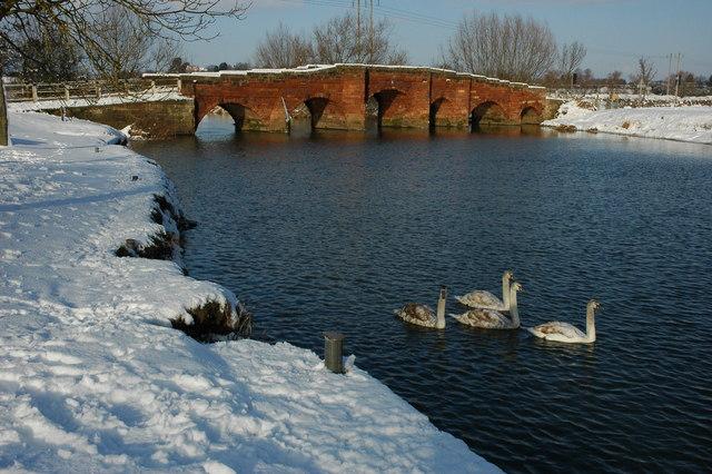 Eckington Bridge and four cygnets