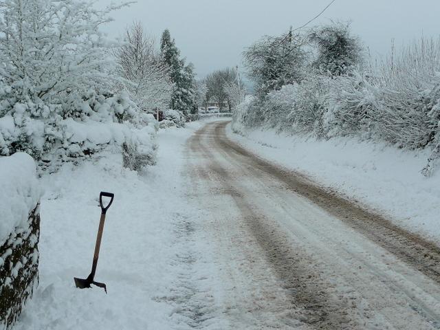 Snowy Bromsash 1