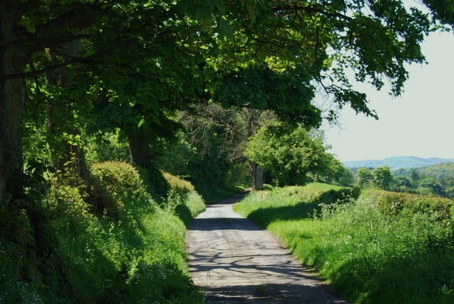Country lane with mature broad leaved trees