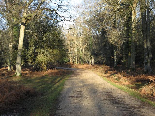 Cyclepath through New Park Plantation