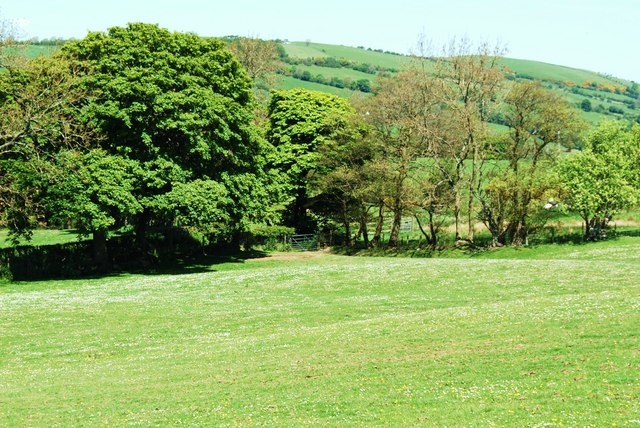 Oaks to the left Ashes to the right