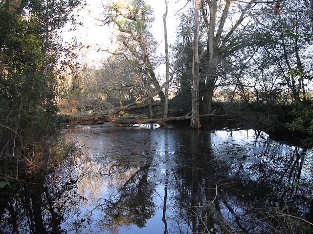 Pond near Bolderford Bridge