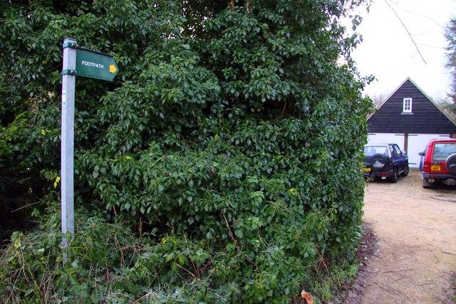 Footpath through the garden