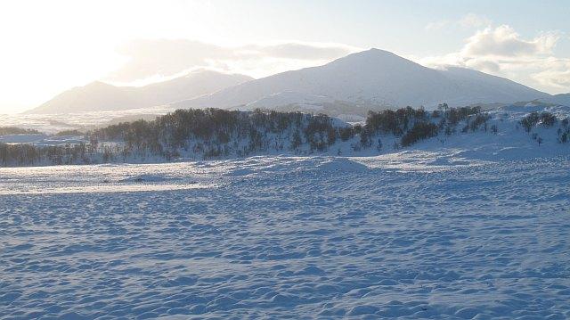 Moorland by Loch Lundie