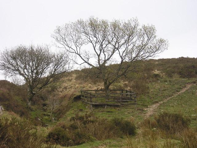 Exmoor: the Hoar Oak Tree