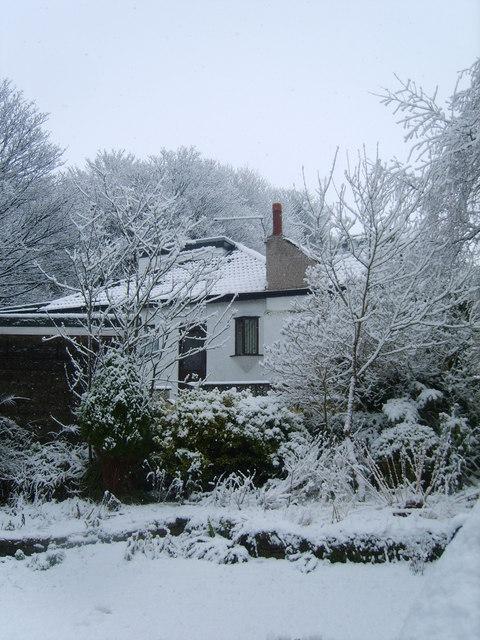 Snowy Garden