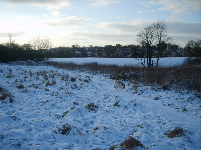 Barton Road Field