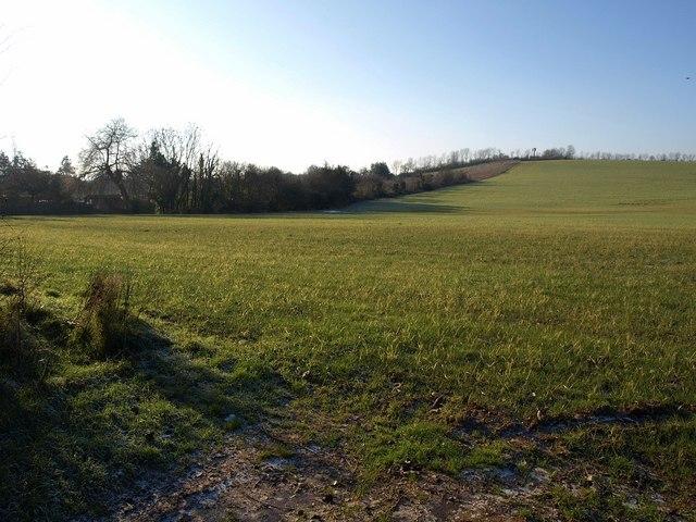 Field at Greendale (2)