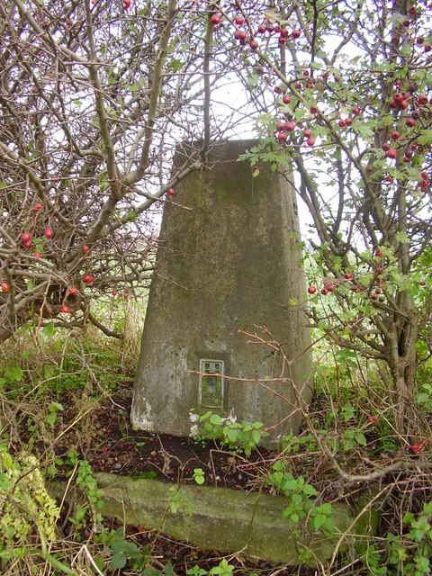 Trig point hiding in hedge