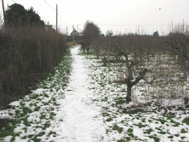 Path in orchard next to Marshborough Road