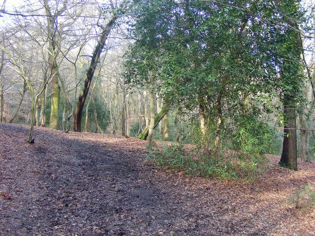 Path through Queen's Wood