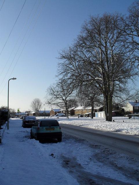Winter trees in Prospect Lane