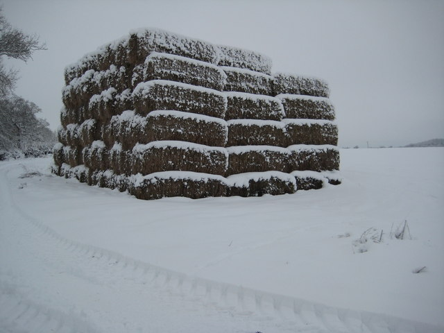 Straw bales in the snow