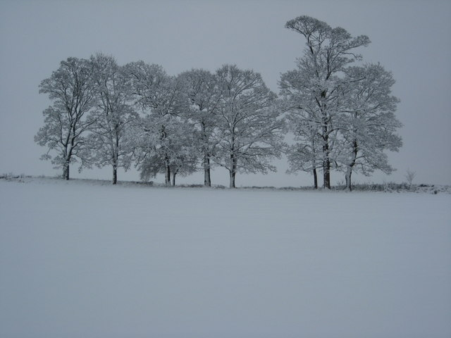 Trees in snow, Earl's Croome