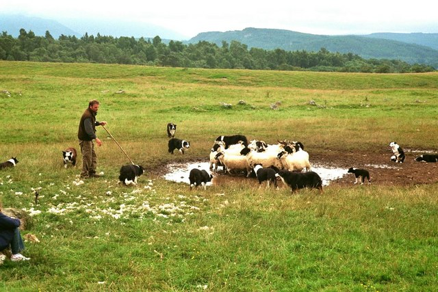 Kincraig, Neil Ross  and his working sheepdog