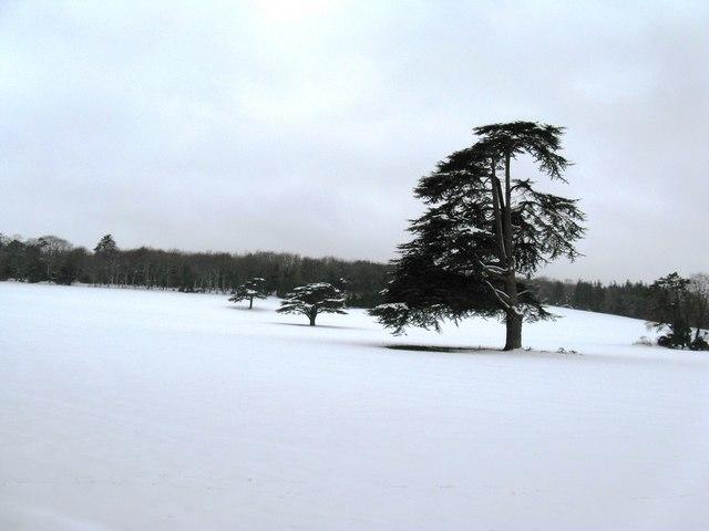 Lonesome Pine (2)