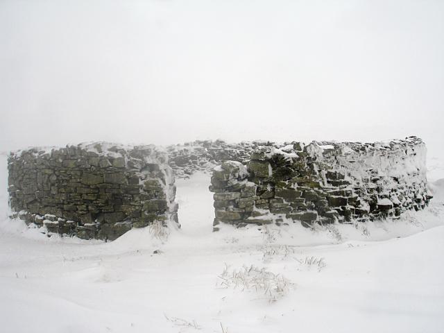 Sheepfold on Caucabush Rigg