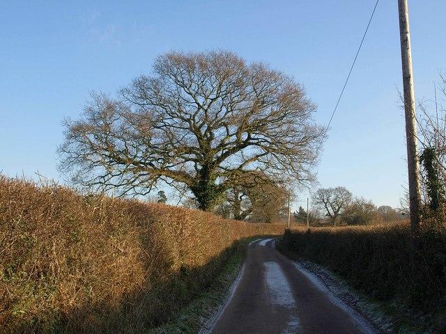 Oak by Dog Lane