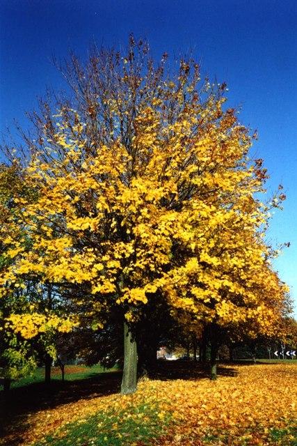 Autumn colours in Meole Brace