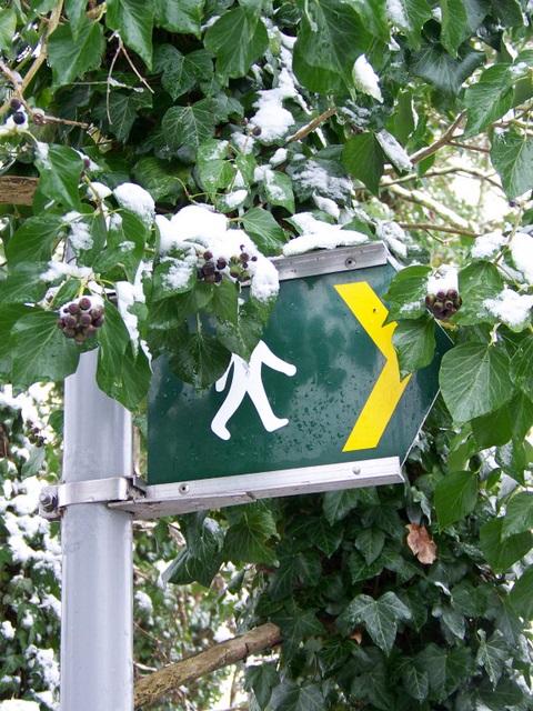 Ivy, Flamstone Street, Bishopstone