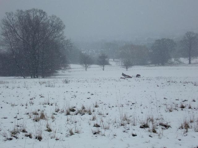 Oakwood Park in the snow, London N14