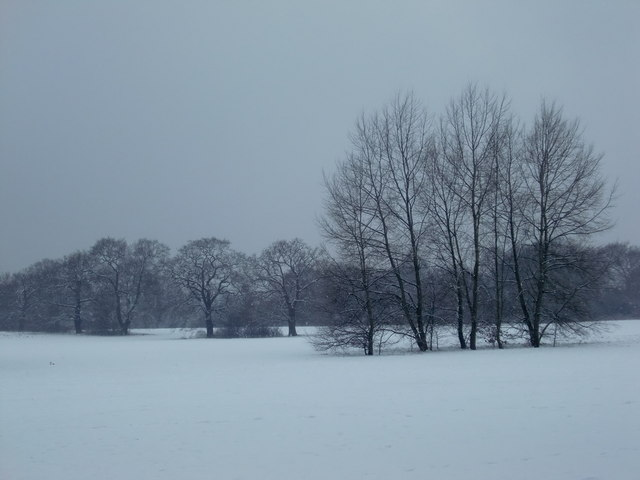 Oakwood in the snow, London N14