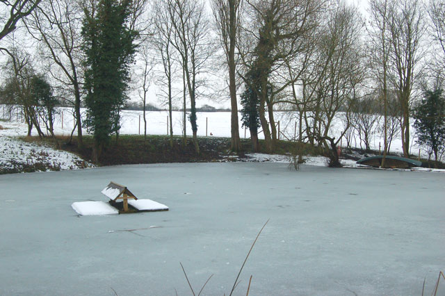 Frankton fishpond frozen