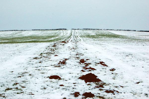 Molehills on the footpath from Birdingbury to Frankton