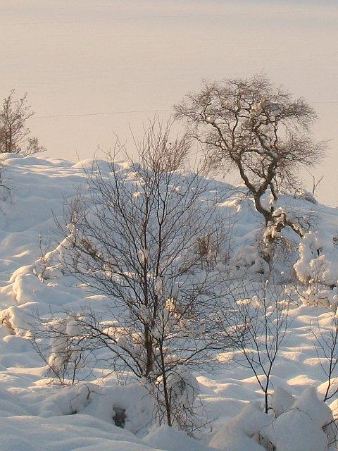 Birches, Loch Lundie