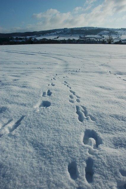 Footprints in the snow, Birlingham