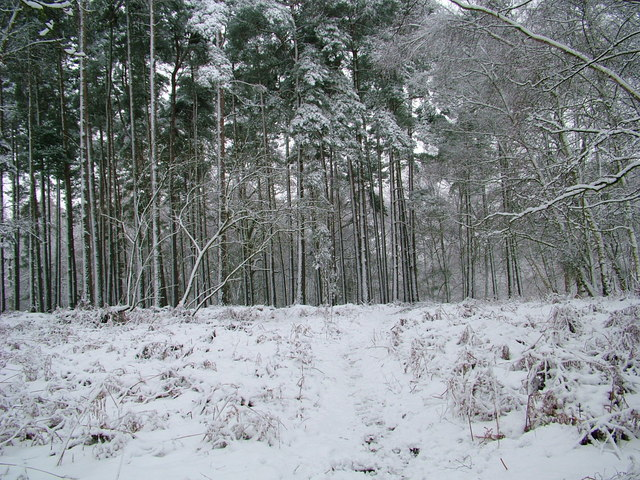 Near Fittleworth Common