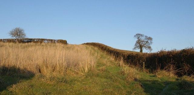 Hillside above Higher Bagmores Farm