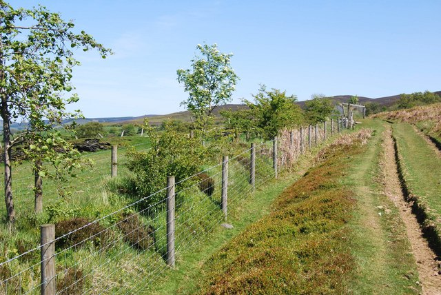New hedgerow in the making