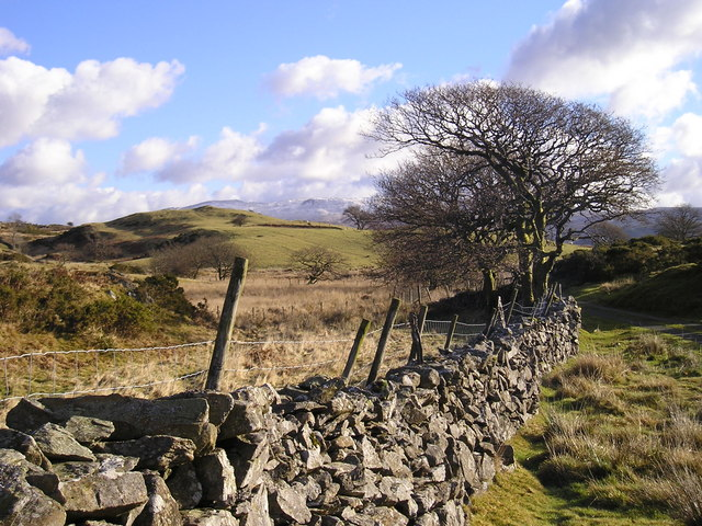 Snowdonia: Wind Shaped Tree