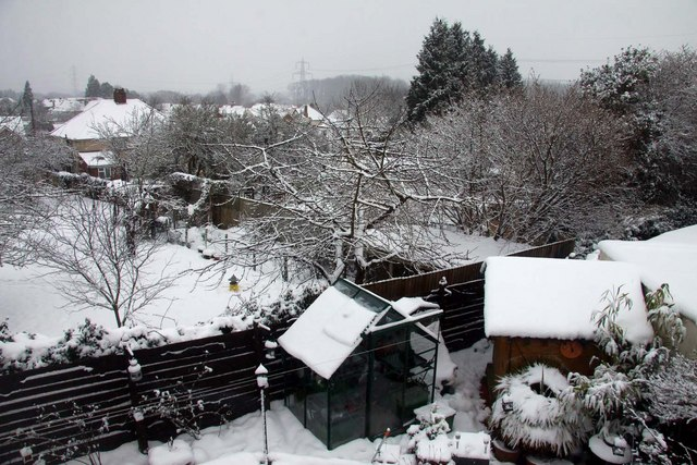 Back gardens in snow covered Kennington