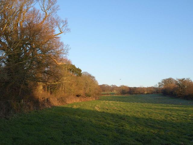 Meadow, Woodbury