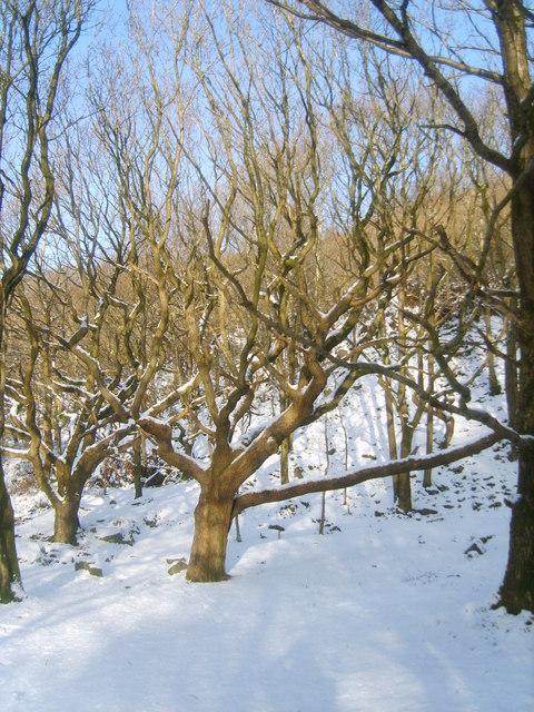 Woodland at Birk Bank