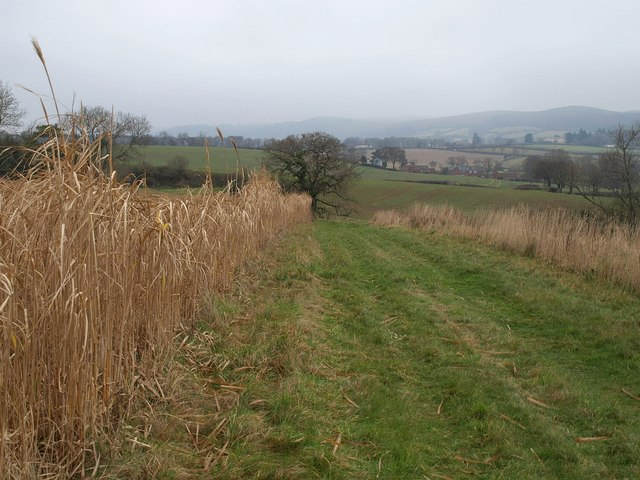 Footpath north of Coursley