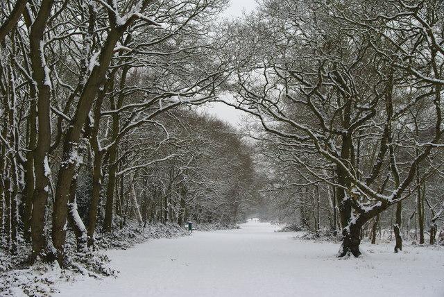 Wimbledon Common - Bridleway