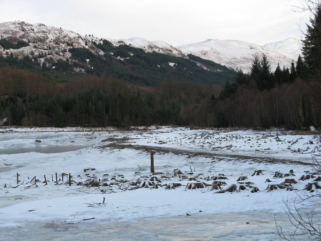 Tree Stumps at Glen Dubh Reservoir in winter