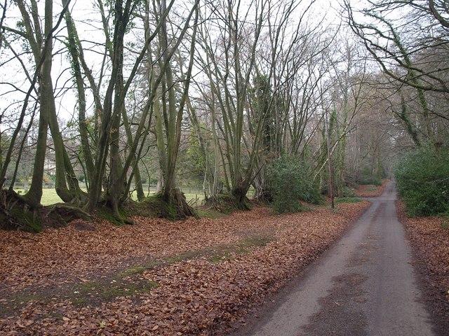 Straight lane, Crowcombe Heathfield