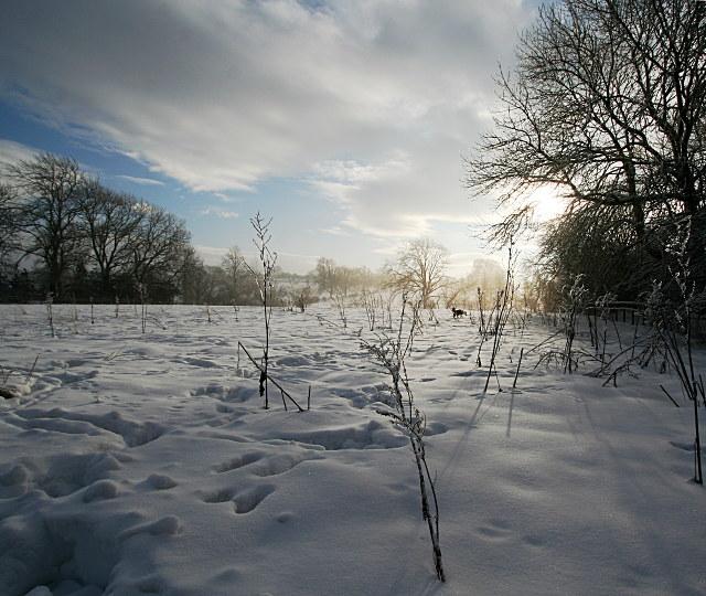 Snowy meadow, icy docken