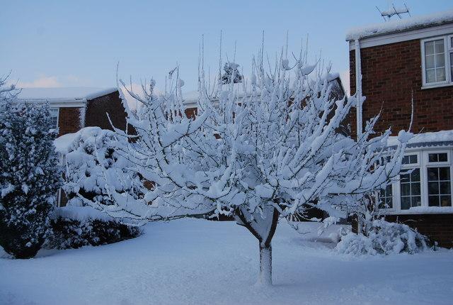A wintery crab apple tree