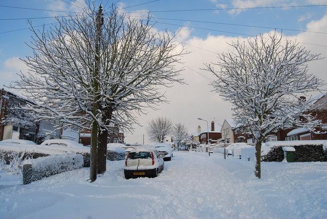 Wintery trees on Chestnut Avenue.